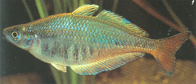 Atlas ryb akwariowych. Ponad 750 gatunkow ryb